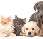 Celebration Of Pets (April 11, 2015)