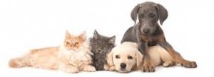 Dog n Kittens