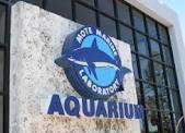 Mote Aquarium Sarasota, FL