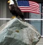 American Eagle _ Flag